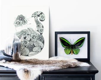 Real framed butterfly: Ornithoptera priamus // RARE // birdwing butterfly