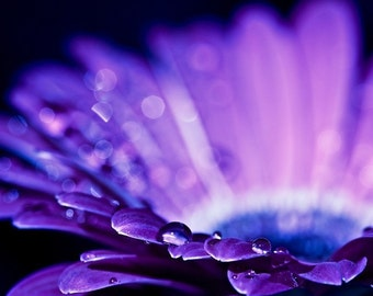 Macro Photography water drops rain home decor wall art romantic purple plum black blue sparkly sparkles vivid gerbera daisy flower for her