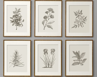 Botanical Prints, Botanical Print Set, Botanical Art, Botanical Wall Art, Botanical Art Prints, Kitchen Decor, Kitchen Wall Art, Wall Art