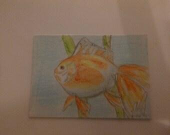 Goldfish ACEO