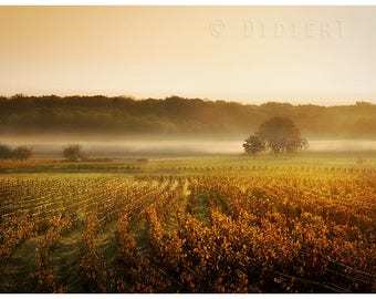 Color photo print: the fields of the vine
