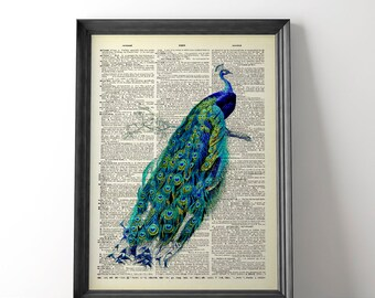 Victorian Peacock, Antique Bird Art, Vintage Feather, Book Page Print, Blue Feather, Peacock Print, Feather Print, Feather Was Art, Unframed