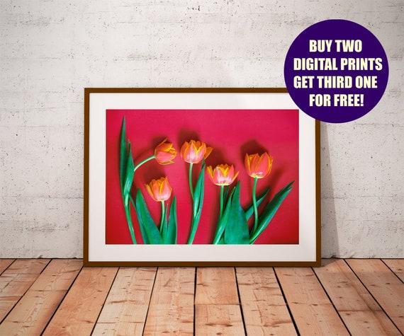 printable tulips photography red tulips wall art tulips