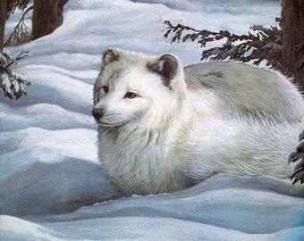 "Arctic Fox""Buy one, choose another free"" fox,wildlife, animal prints, bird prints, wildlife prints, animals, birds"