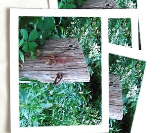 Photo Note Card Set - Set of Four Photo Cards - Rustic Woodland - Set of 4 Blank Note Cards - Woodland Photography - Blank Cards - Gift Set