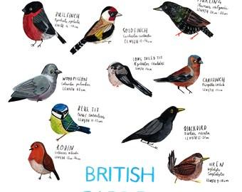 A3 British Garden Birds Poster