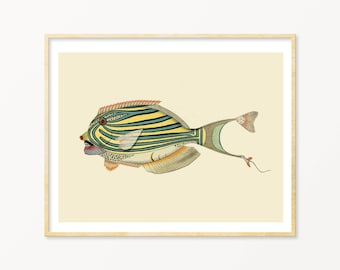 Fish Art Print / Art Poster / Collage / Fish / Sea / Wall Art / Sea Life Art Print / Giclée prints