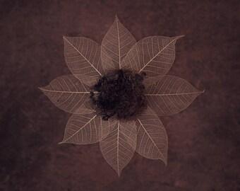 Newborn Digital Background (Organic, Natural, Nest, brown/beige)