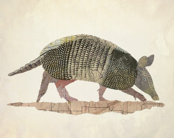 Texas Nine Banded Armadillo
