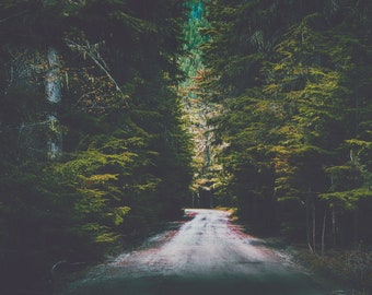 "landscape wall art, large wall art, large art, glacier park, forest, trees, landscape art prints, wilderness landscape - ""Shadowed Paths"""