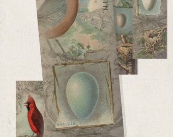 """Printable Bookmarks, Birds Eggs and Nests Instant Download DIY Collage Sheet 1.5"""" x 6"""" jpg or pdf"""