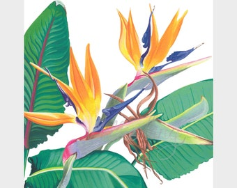 A 'Bird of Paradise' tropical flowers. Limited edition giclee print 8x8""