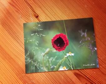 Greeting card / / poppy / / A6