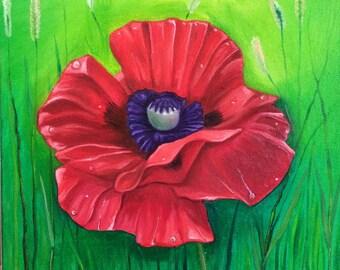 Original Oil Painting Red Poppy