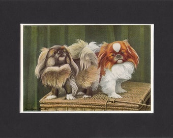 Pekingese 1919  Vintage Dog Print by Louis Agassiz Fuertes Small Peke Painting Print Mounted with Mat Pekingese Print