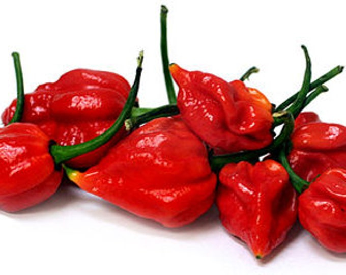 Red Scorpion Chile Pepper Powder - EXTREMELY HOT