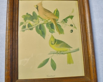 Vintage Cardinal Print Wooden Frame with Glass Birds Country Decor PanchosPorch