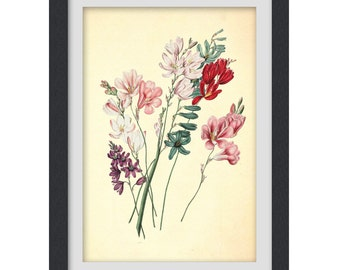 Botanical artwork, 8 x 11 inch floral art print, pink, red, digital print up cycled from a botanical bookplate, Digital Download No 06