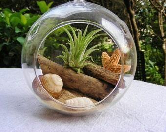 Air Plant Terrarium Kit ~ Small Air Plant Terrarium Kit ~ Coastal Living Beach House Decor ~ Driftwood ~ Starfish ~ Sea Shells ~ Sand Choice