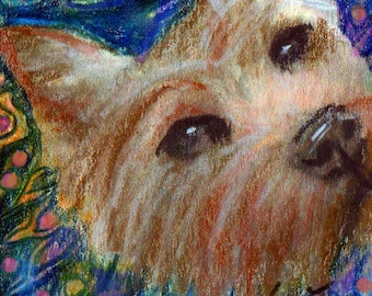 original art aceo drawing Norwich terrier group Westminster