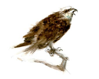 Osprey watercolor painting - bird watercolor painting - 5x7 inch print - 0140
