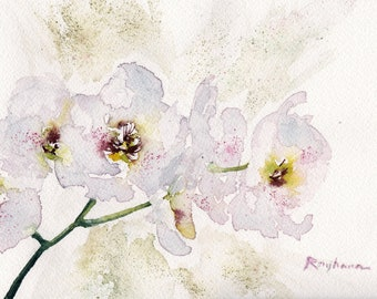 White orchid - white Orchid