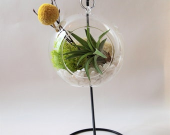 Air plant terrarium kit with yellow ball ; unique gift; tillandsia; air plant;terrarium;desk decor