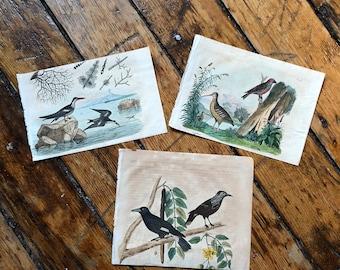 1835 ANTIQUE BIRD ENGRAVINGS - set of 3 bird prints - original antique hand colored engravings - song birds water birds  by Guerin
