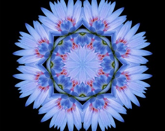 Flower Mandala Healing Art - Medicine Woman