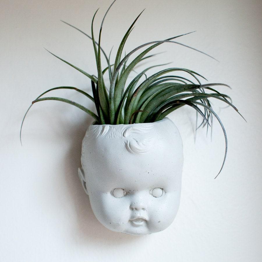 Doll head wall planter concrete baby head air plant zoom reviewsmspy