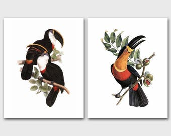 Toucan Art Set of Two, Victorian Bird Prints (Tropical Home Wall Decor, Cottage Bedroom Artwork, Exotic Species) - 19th Century Artists
