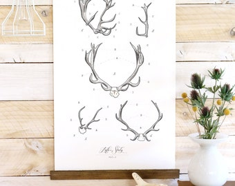 Antler Study - large watercolor antler wall hanging, wood trim art printed on textured cotton canvas. Vintage Science Poster chart Vol.1