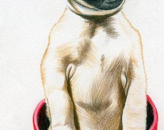 Dog Art, pug, 5x8 print