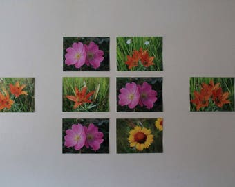 Wild Rose and Tigerlily Grouping of Photographs