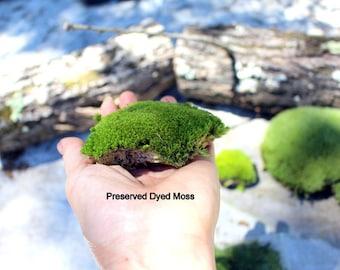 Preserved Pillow Moss-Softer Pillow Moss-Bulk moss-Cushion Moss-Quart or Gallon bag-NO WATER needed-Fairy Garden Moss-Wedding Moss