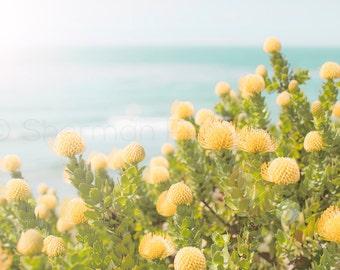 Beach Yellow Flowers - Beach photography - Nature photo - yellow flower photo - nature art - Beach Photo - Ocean Photography - Beach Decor