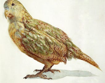 Kakapo Digital Vintage Bird Image Instant Download for Paper Arts, Collage, Scrapbooking ATCs  and MORE PSS 3356