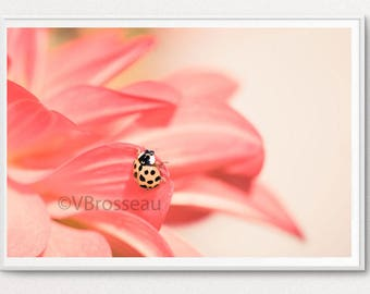 Photograph lady bug on pink flower petal - macro flower and ladybug photography - children wall decor - ladybug decor