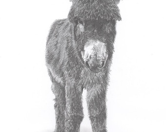 DONKEY Foal baby pencil art drawing picture Limited Edition print by UK artist