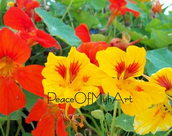 Beautiful Orange and Yellow Flowers