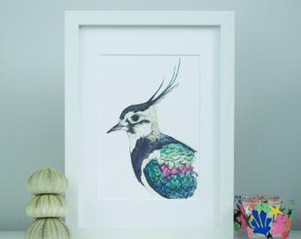 A5 Lapwing Bird Watercolour and ink illustrated fine art print