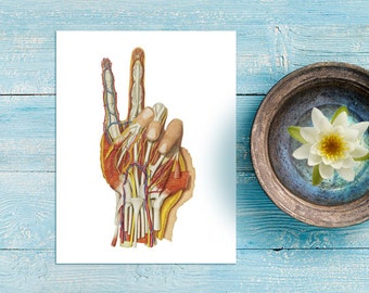 minimalist peace sign anatomical hand 8x10 art print | antique style, medical, anatomyl, hand gesture, macabre art, peace be with you