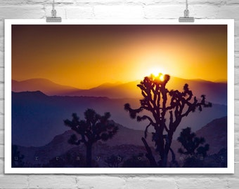 Joshua Tree Photograph, Desert Sunset Art, Desert Landscape Photo, Mojave Desert Photograph, Western Picture, Cactus Photo, Southwestern Art