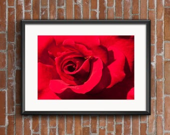 Red Rose Wall Art, Red Rose Wall Decor, Red Rose Art, Red Rose Print, Rose Photography, Rose Photo, Rose Photograph