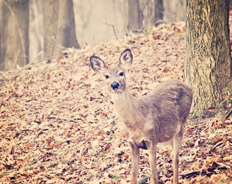Deer Photography, Deer Print, Woodland Art, Forest Print,  Brown Deer Art, Woodland Nursery Art, Pastel Woodland Art, Wildlife Art