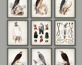 Falconry Wall Art Print Set of 9 - Falconry Art Print - Bird Of Prey - Falcon - Hawk - Hawking - Gamehawking - Falconer Art Gift Idea