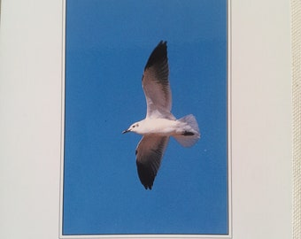 """""""Marine"""" post card / Seagull in flight / Occasion"""