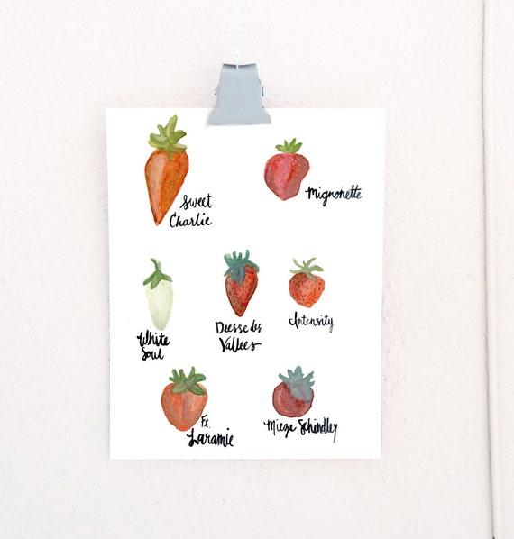 Watercolor Strawberry Cultivars art print of an original watercolor illustration