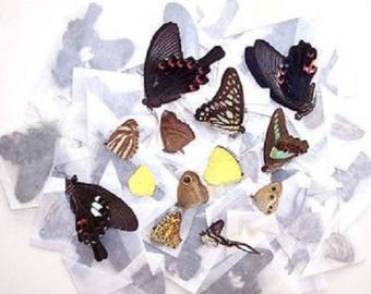 50 Real Butterflies Moths Wholesale Mix Lot Unmounted Wings Closed