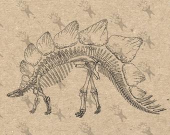 Anatomical Dinosaur Skeleton Stegosaurus Raptor ClipArt Transfer Digital File Instant Download DIY for t-shirt bag stickers pillow cases etc